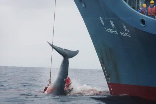 181226-japan-whaling
