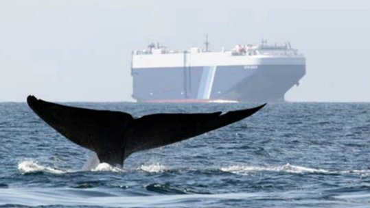 ships-whales