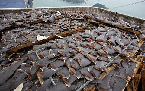 shark-fins.jpg