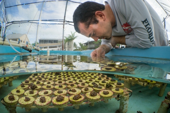 Coral Restoration in the Keys
