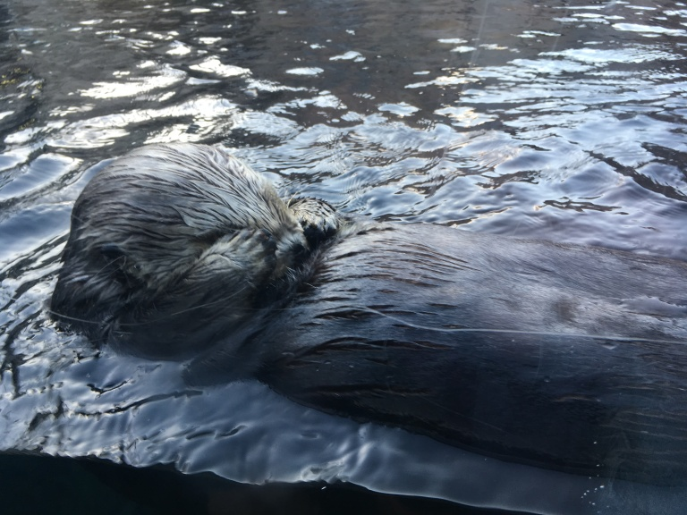 The Sea Otter Story