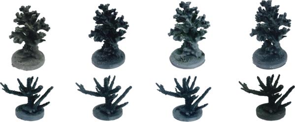 3D corals