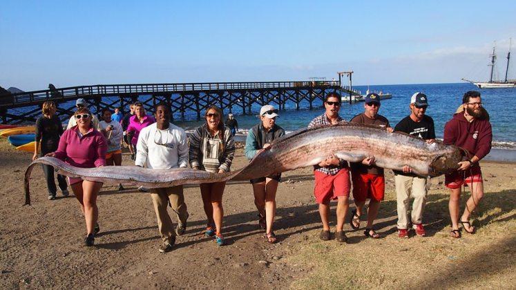 longest fish