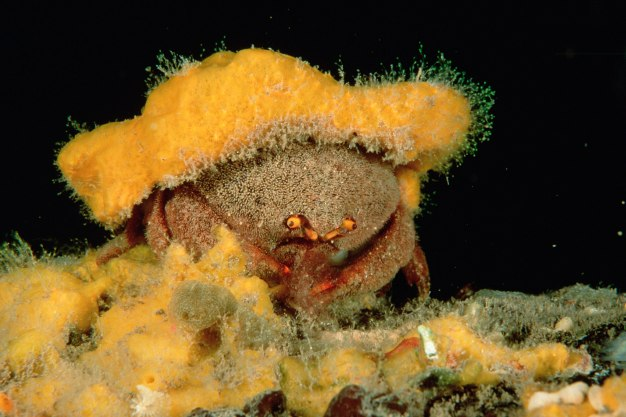 sponge hat