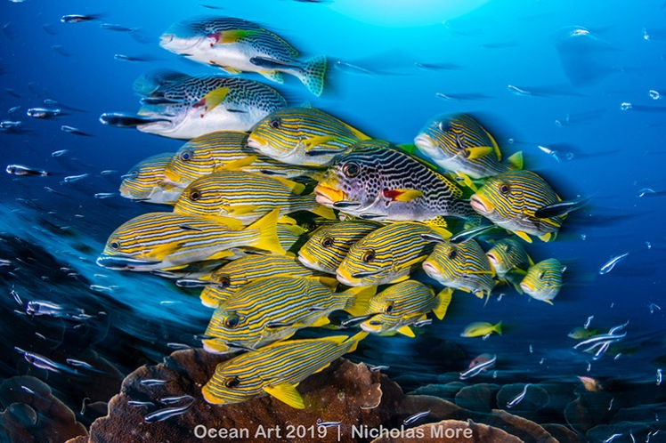 A Blur of Sweetlips by Nicholas More