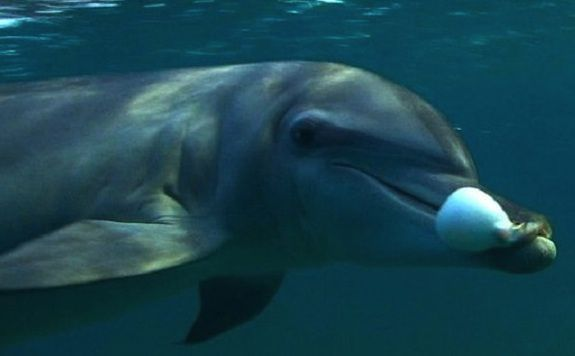 dolphin chewing