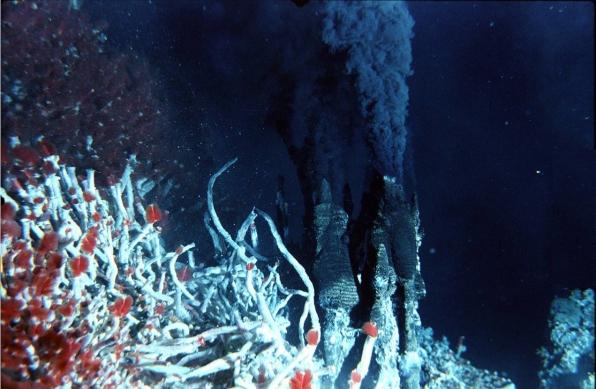 hydrothermal habitat