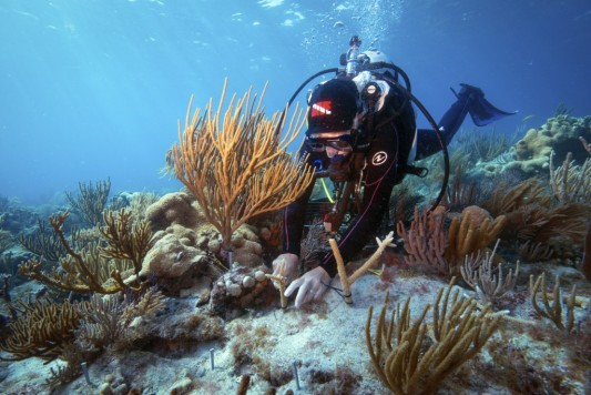 researcher on reef